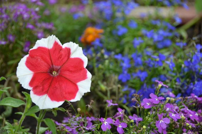 kwaity w gorodzie montessori garden ilovemontessori