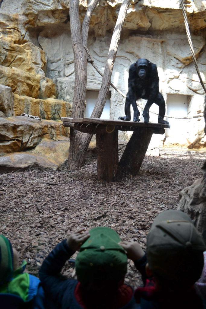 Warszawskie zoo - wycieczka przedszkola ilovemontessori