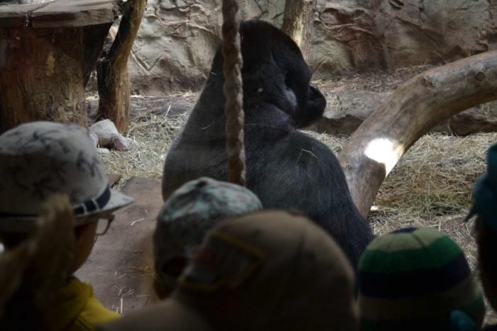 wizyta w zoo przedszkole ilovemontessori
